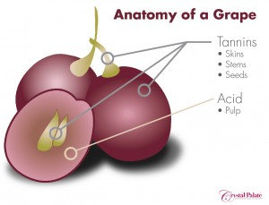 Anatomy of a grape