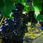 Fall Wine Events Crystal Palate takes a look at upcoming Hampton Roads wine events