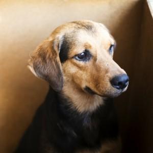 Homeless Animal Awareness Week