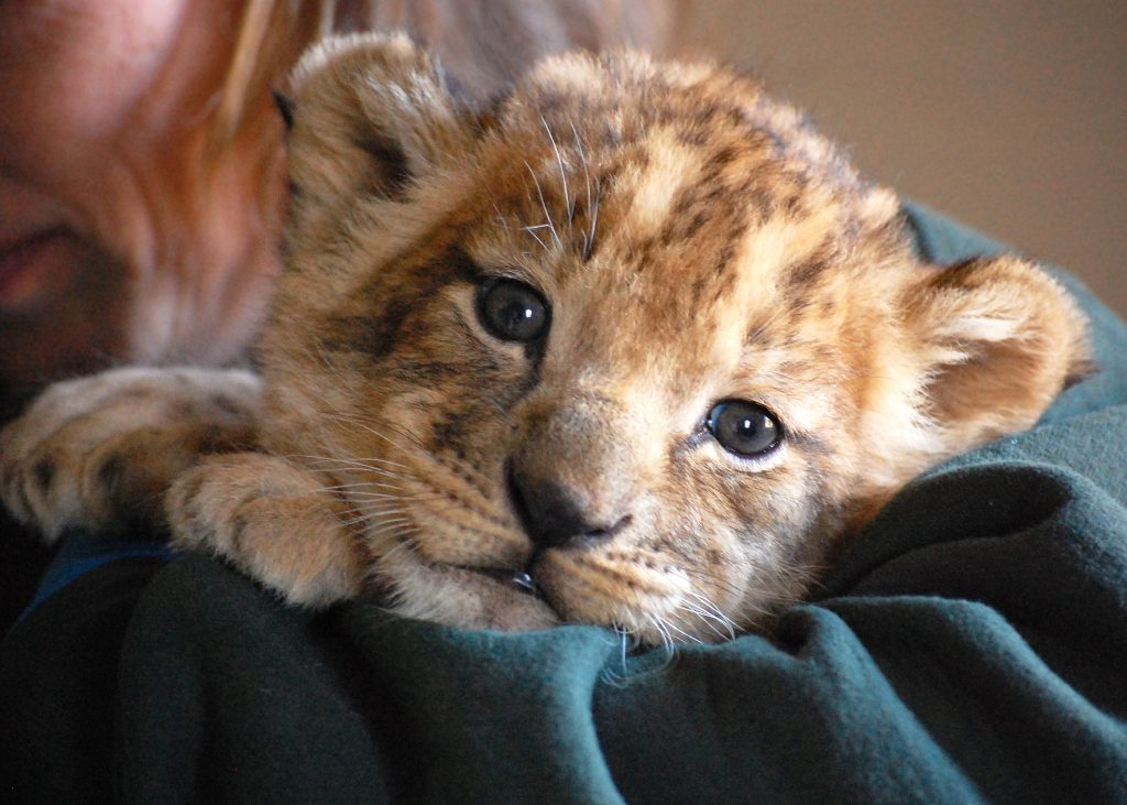 Photo Courtesy Virginia Zoo